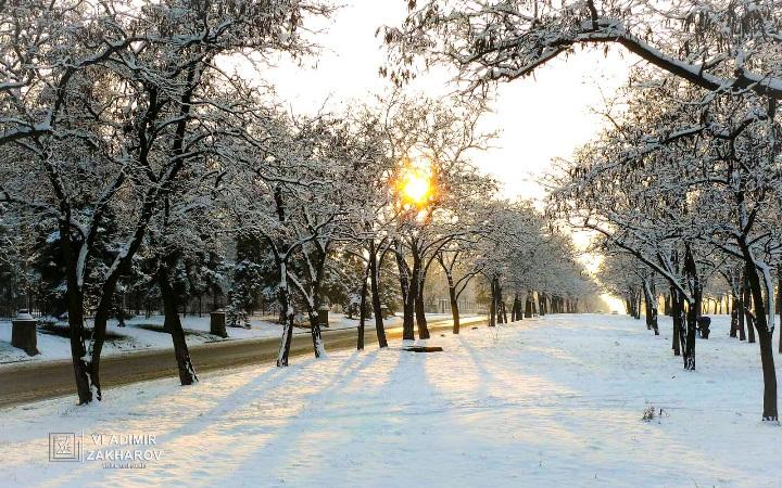 Деревья солнце зима.