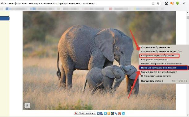 Поиск по изображению Яндекс картинки 3