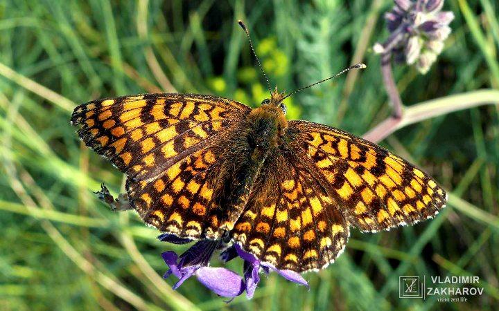 Бабочка 6.