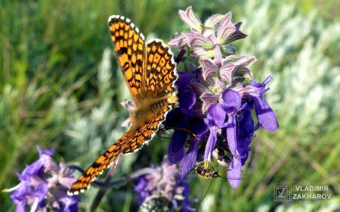 Бабочка 2.