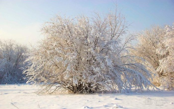 Зимний лес 1.