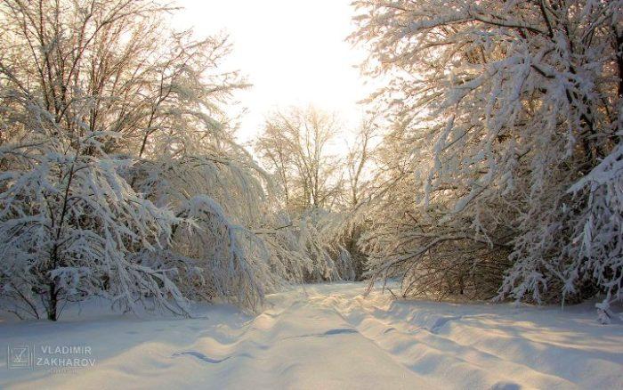 Зимний лес 2.