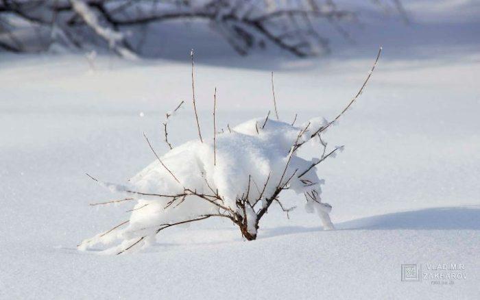Зимний лес 3.