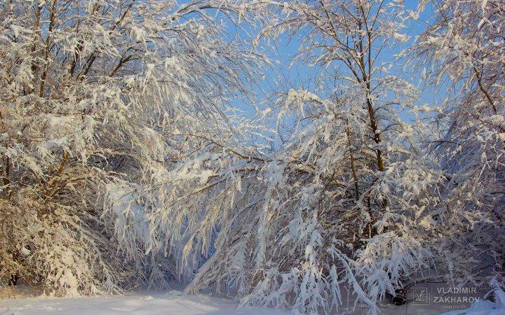 Зимний лес 4.