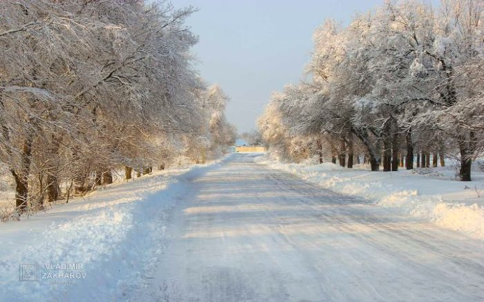 Зимний лес 6.