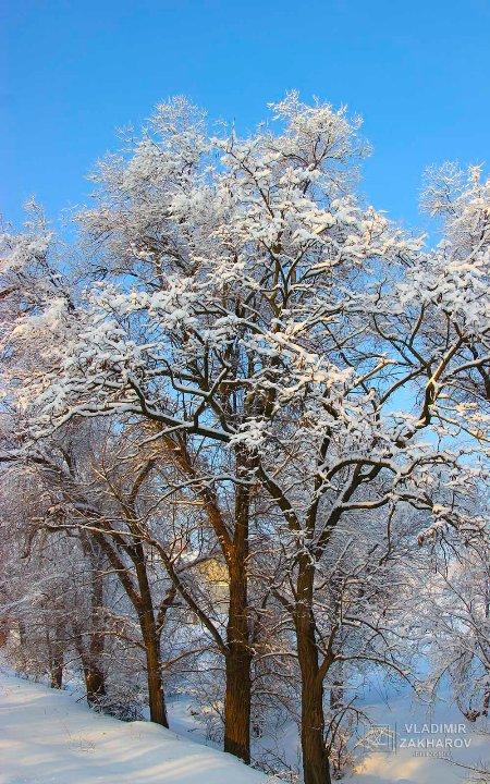 Зимний лес 7.